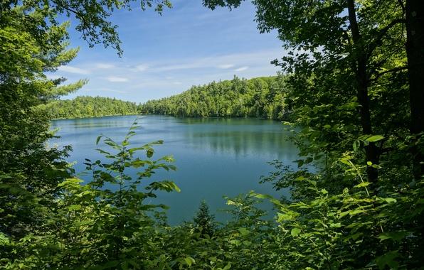 Картинка зелень, лес, листья, деревья, ветки, озеро, парк, Канада, Pink Lake, Gatienau Park