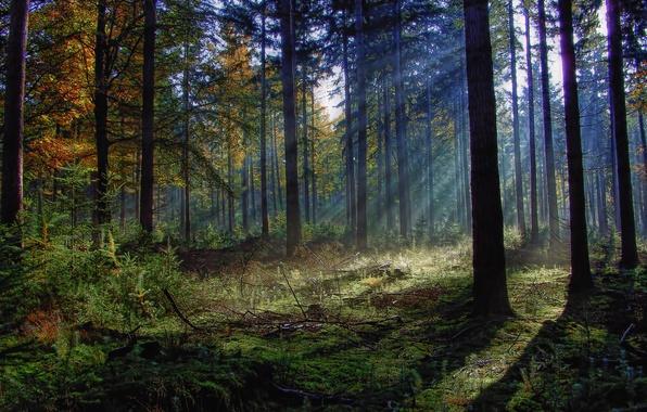 Картинка лес, трава, солнце, лучи, деревья, ветки, листва, кустврник