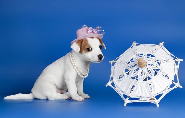 Картинка собака, зонт, щенок