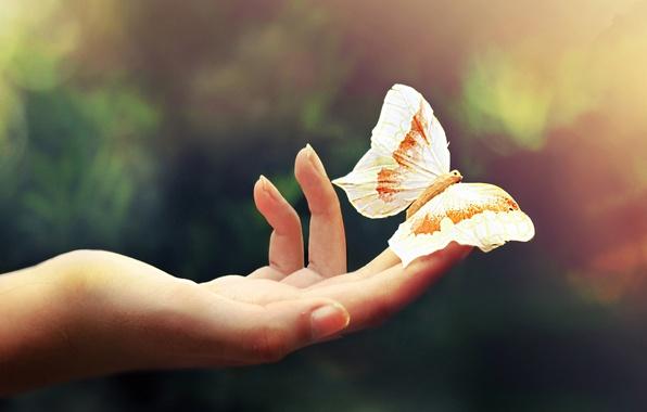 Картинка макро, свет, легкость, бабочка, цвет, рука, пальцы, ладонь