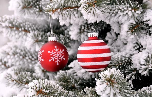 Картинка зима, снег, крупный план, ветки, праздник, шары, игрушки, красные, Новый год, хвоя
