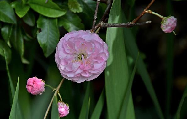Картинка цветок, макро, ветка, бутоны