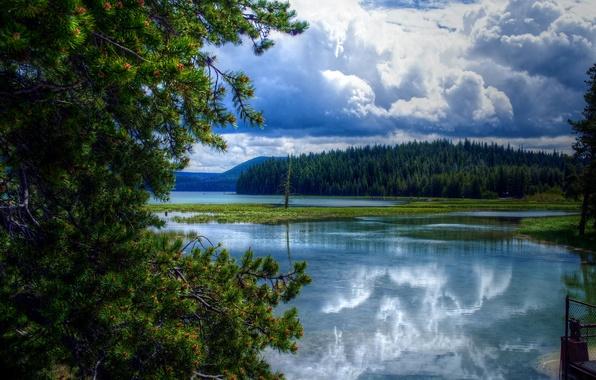 Картинка лес, облака, деревья, тучи, озеро, США, Oregon, East Lake