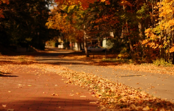 Картинка осень, листья, макро, деревья, природа, город, фон, дерево, widescreen, обои, улица, размытие, желтые, дорожка, wallpaper, …
