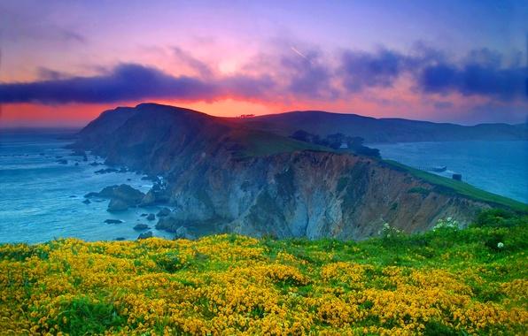 Картинка море, небо, облака, закат, цветы, скала, океан, Калифорния, USA, США, California, Point Reyes National Seashore, …