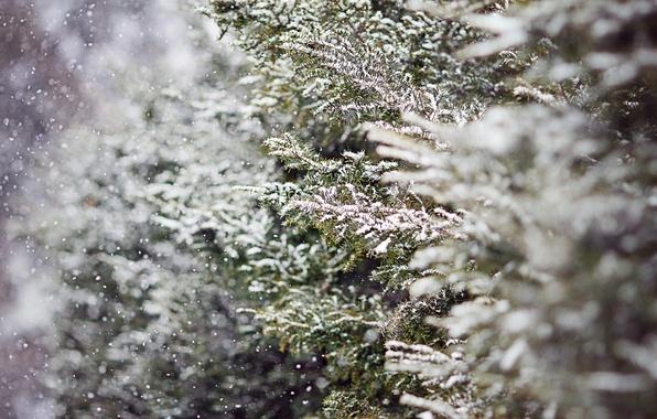 Картинка зима, снег, деревья, ветки, природа, елка, ель, размытость, ёлка