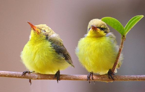 Картинка птицы, природа, ветка, пара, листик