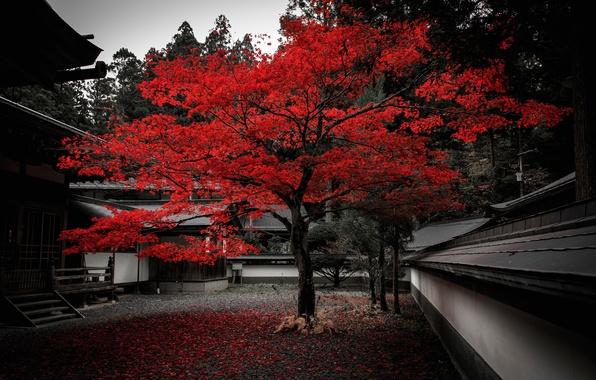 Картинка осень, листья, дом, дерево, Япония, двор, багрянец