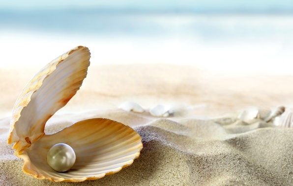 Картинка песок, море, пляж, солнце, тропики, океан, ракушка, beach, sand, seashell, жемчужина, perl