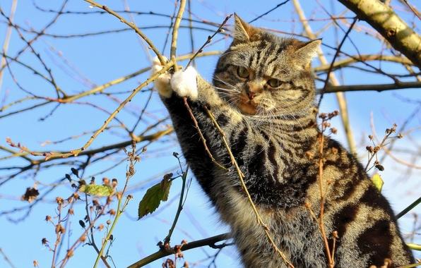 Картинка кошка, кот, ветки, дерево, на дереве