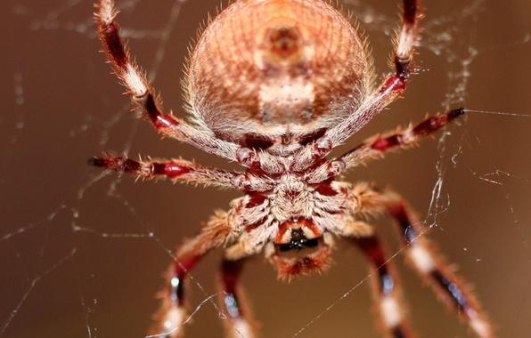 Картинка паутина, паук, волоски