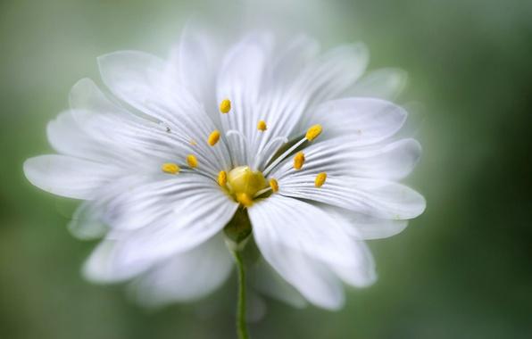 Картинка цветок, лепестки, тычинки