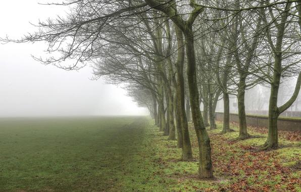 Картинка зелень, небо, трава, листья, деревья, пейзаж, ветки, природа, туман, фон, дерево, widescreen, обои, ствол, wallpaper, ...