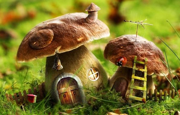 Картинка зеленый, дом, грибы, лестница, 156