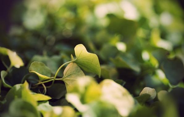 Картинка трава, листья, макро