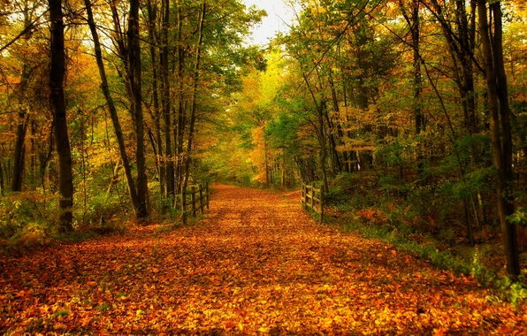 Картинка дорога, осень, лес, листья, деревья, мост, природа, парк, colors, colorful, forest, road, trees, nature, bridge, …