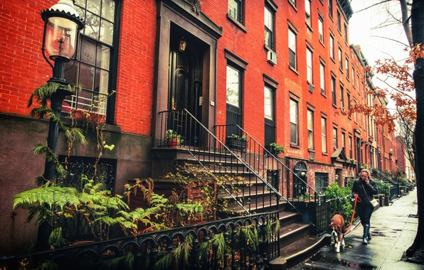 Картинка женщина, собака, Нью-Йорк, Бруклин, тротуар, фонарный столб, Соединенные Штаты, Brownstones