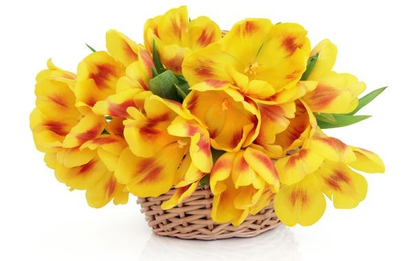Картинка белый, цветы, фон, тюльпаны, корзинка