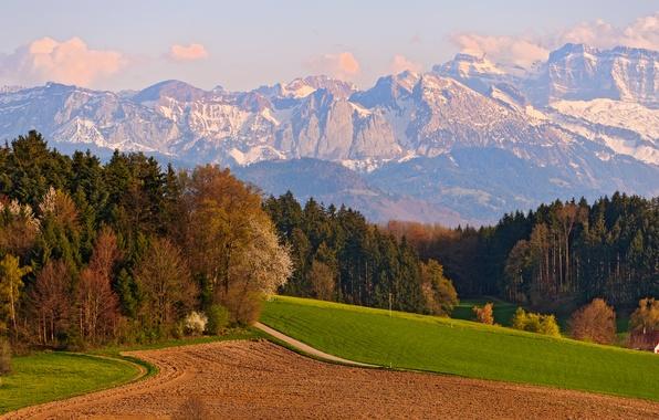 Картинка Поле, Горы, Деревья, Швейцария, Switzerland