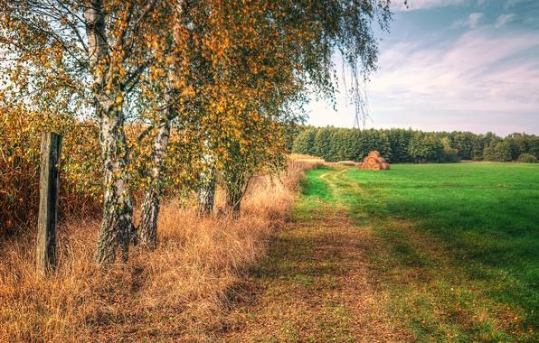 Картинка поле, осень, небо, трава, деревья, сено, березы