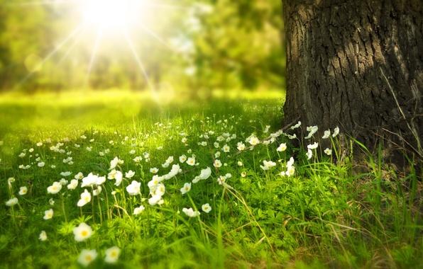 Картинка лето, лучи, свет, цветы, дерево, поляна, ствол, Larisa Koshkina