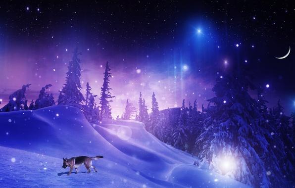 Картинка зима, лес, звезды, снег, деревья, снежинки, ночь, фотошоп, собака, месяц, сугробы, овчарка