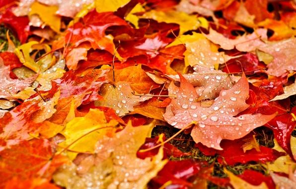Картинка осень, листья, капли, макро, природа, капельки, желтые, оранжевые