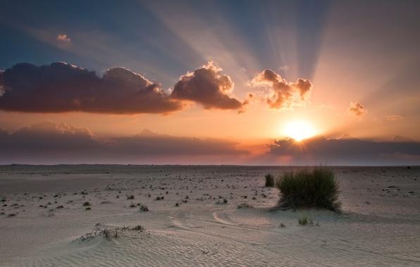 Картинка небо, солнце, облака, закат, оранжевый, синий, пустыня, куст, desert, sunset, clouds, sand, sunlight, bush, sun ...