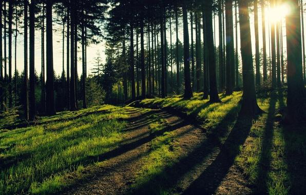 Картинка зелень, лес, трава, листья, солнце, деревья, стволы, листва, вечер, лучи света, лесная природа