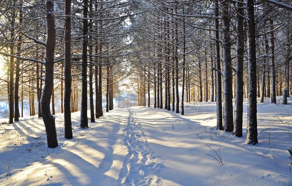 Картинка зима, лес, снег, деревья, следы, просека