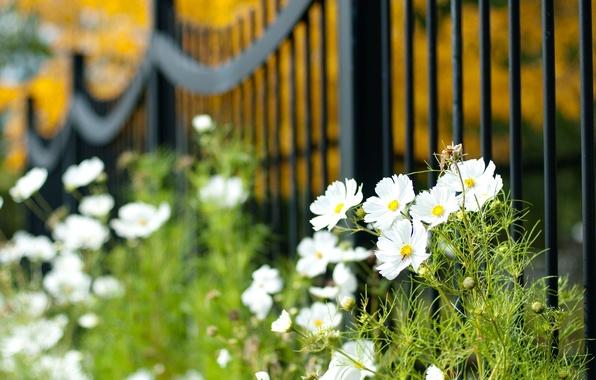 Картинка зелень, белый, макро, цветы, widescreen, обои, растительность, забор, растение, размытие, ворота, ограждение, wallpaper, цветочки, широкоформатные, …