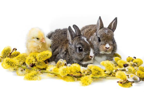 Картинка кролики, белый фон, цыплёнок, верба, детёныши, троица, крольчата