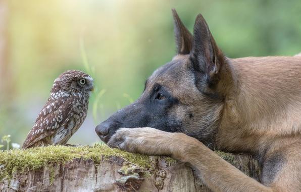 Картинка животное, сова, птица, пень, собака, голова, профиль, пёс