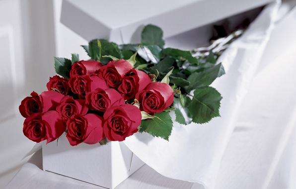Цветы розы фото подарить
