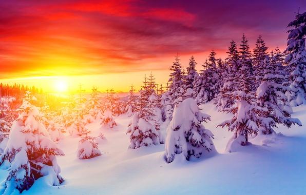 Картинка закат, фото, Небо, Природа, Зима, Снег, Рассвет, Ель