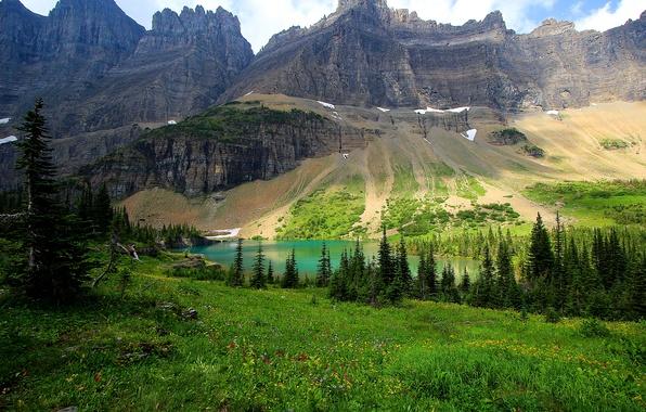Картинка трава, деревья, цветы, горы, озеро, скалы, поляна, США, лужайка, Glacier National Park