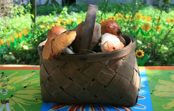 Картинка осень, природа, обои, корзина, грибы, еда, деревня, прогулка, разное