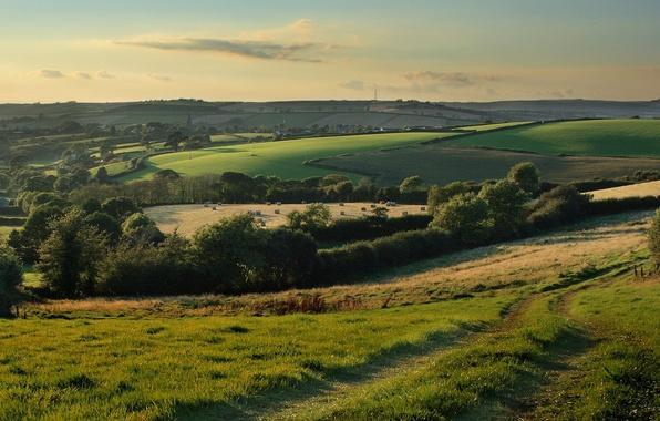 Картинка дорога, поле, природа