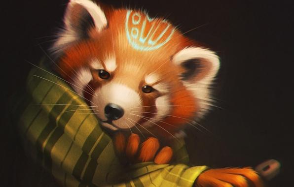 Картинка взгляд, медведь, арт, панда, плед, red panda
