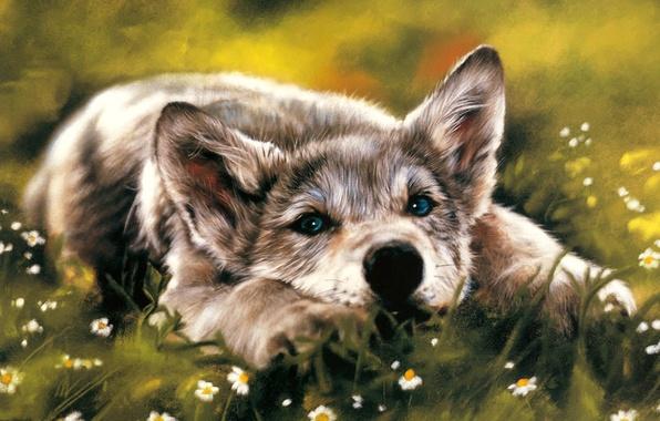 Картинка взгляд, волк, собака, лежит, тоска