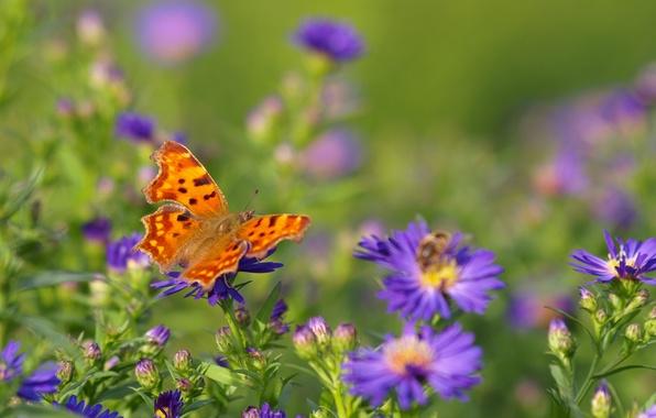 Картинка поле, цветы, пчела, бабочка, крылья, луг, насекомое