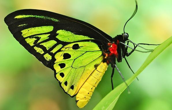 Картинка лист, фон, бабочка, травинка