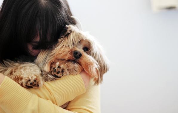 Картинка морда, девушка, фон, widescreen, обои, настроения, собака, брюнетка, пес, wallpaper, мордашка, собачка, широкоформатные, песик, background, …