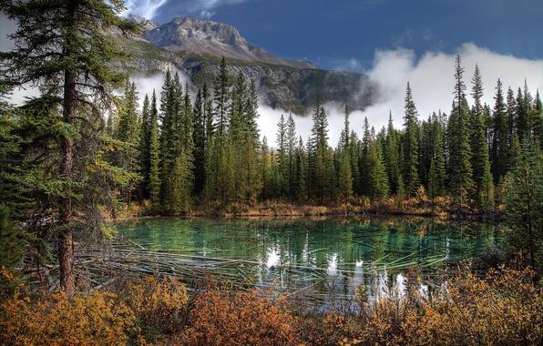 Картинка фото, Природа, Горы, Озеро, Канада, Ель, Парк, Банф