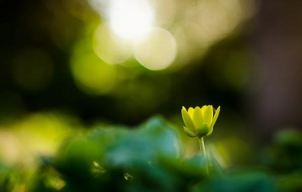 Картинка цветок, цветы, зеленый, фон, обои, размытие, wallpaper, широкоформатные, flowers, background, боке, полноэкранные, HD wallpapers, цветочек, …