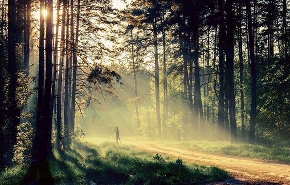 Картинка зелень, трава, листья, солнце, лучи, деревья, пейзаж, природа, фон, дерево, widescreen, обои, листок, wallpaper, листочки, …