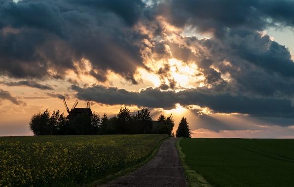 Картинка дорога, поле, небо, солнце, облака, лучи, мельницы, рапс