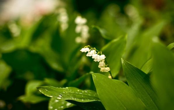Картинка лес, белый, цветы, природа, парк, красота, растения, сад, зелёный, скромность