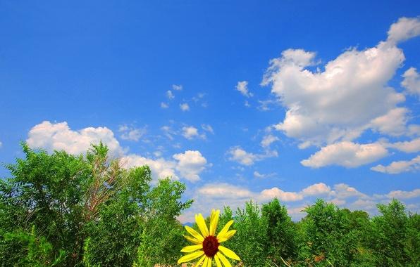 Картинка зелень, цветок, небо