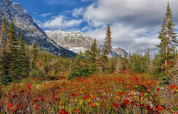 Картинка снег, деревья, цветы, горы, луг